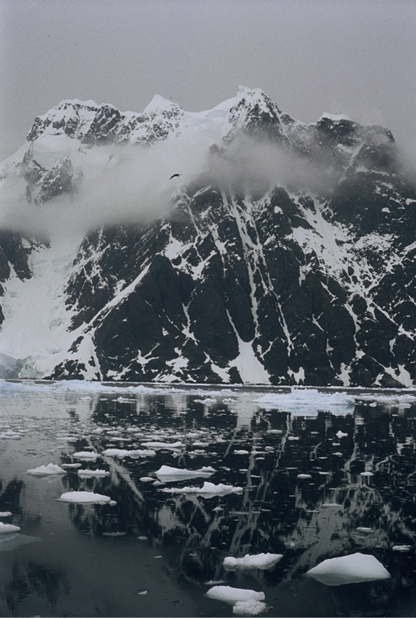 Photo Carole DARCHY - Péninsule Antarctique, Détroit de Lemaire -Janvier 1991 - REPRODUCTION INTERDITE